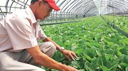 Làm nông công nghệ thông minh ở xứ sở Kim Chi