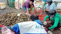 Nguyên nhân tôm hùm chết hàng loạt bất thường ở Phú Yên
