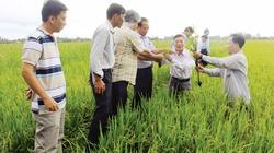 Phòng chống dịch rầy nâu, bệnh vàng lùn, lùn xoắn lá cho cây lúa