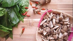 Món đặc sản nấm mối chỉ có vào mùa mưa ở miền Tây