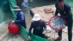 Thêm no ấm nhờ được mùa cá cơm ở Khánh Hòa