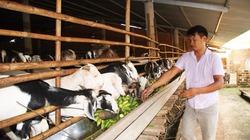 Lạc bước trong trang trại nuôi hàng nghìn con dê lớn nhất tỉnh Đồng Nai
