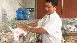 Mô hình nuôi thỏ thu nhập trên 1 tỉ đồng/năm của ngư dân Hà Tĩnh