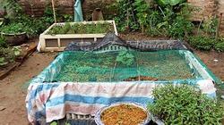 """Nông dân phố """"bật mí"""" cách diệt côn trùng bằng kê giường, mắc màn cho vườn rau sạch"""