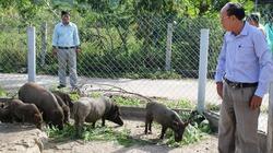 Lão nông lộ bí quyết thu tiền tỉ nhờ nuôi tôm, chăn lợn, trồng cây