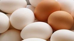 Trứng gia cầm thế nào là sạch?