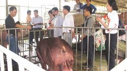 Không sử dụng chất cấm trong chăn nuôi