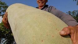 """Sửng sốt với những trái cây khổng lồ """"gây bão"""" thị trường Việt"""