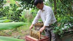 Bí quyết thu hàng nghìn lít mật từ mô hình nuôi ong VietGAP