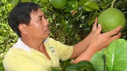 Bí quyết làm giàu mỗi năm lãi 1 tỉ đồng từ vườn bưởi da xanh