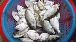 Ngày đông nhớ món canh cá dò nấu khế