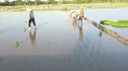 Công ty Thủy nông Hưng Yên nỗ lực phục vụ sản xuất và đời sống nhân dân