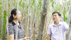 Tìm cách tăng thu nhập cho người trồng mía