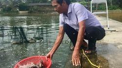 """""""Biệt tài"""" ươm cá giống bán cả sang Lào, thu tiền tỉ/năm của lão nông U70"""