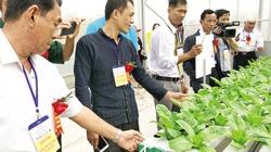 """""""Siêu"""" nông dân trải nghiệm làm nông nghiệp công nghệ cao"""