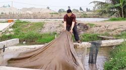 Mạnh dạn nuôi cá trắm đen nước lợ, thu tiền tỉ