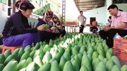 Nông sản Sơn La đã có mặt trên thị trường quốc tế
