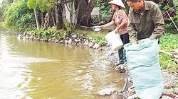 Vốn Hội giúp nông dân Hà Nam làm giàu