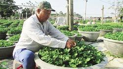 Học nghề trồng hoa, nông dân bỏ túi mỗi năm hơn trăm triệu đồng