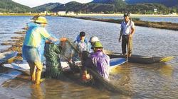 Đánh thức tiềm năng mô hình cá - lúa ở xứ Thanh