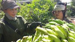 Nông nghiệp Yên Châu khởi sắc