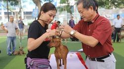 Bỏ tiền triệu học cách dắt chó đi thi ở Sài Gòn