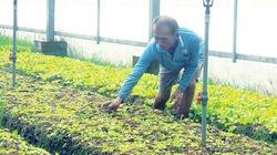 Trồng rau sạch trong nhà lưới tiết kiệm nước, hạn chế sâu bệnh