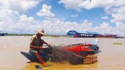 Biển Hồ vắng cá, Sài Gòn bỗng buồn