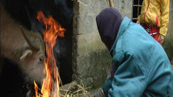 Nhiệt độ hạ thấp còn -1,6 độ C, người dân miền núi cấp tập tìm cách tránh rét cho trâu bò