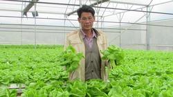 Nông dân phố về quê dựng vườn rau công nghệ cao