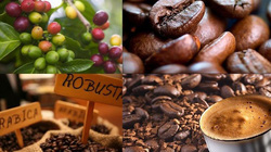 Cà phê dừng hẳn, hồ tiêu chưa thể vượt mức 65