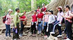 Chuyến đi rừng thú vị xem khỉ leo cây, bằng lăng 5 ngọn, cây gõ Bác Đồng