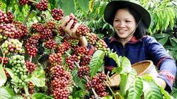 Cà phê đảo chiều tăng vọt, hồ tiêu tăng chạm mức 65