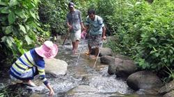 """Lên cao nguyên Lâm Đồng """"thưởng thức"""" món rau rừng, cá suối"""