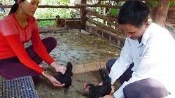 """Lão nông Bình Định """"ném"""" hơn nửa tỉ đồng để thuần dưỡng nhiều giống gà quý hiếm"""