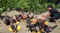 Sống dưới 2 USD mỗi ngày, Bill Gates khuyến cáo chăn nuôi gà để thoát nghèo