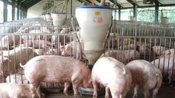 Phát hiện 17 mẫu thức ăn chăn nuôi vi phạm chất lượng