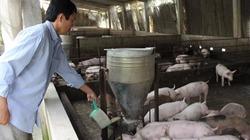 Cấm chăn nuôi kháng sinh: Nông dân thay đổi ra sao khỏi việt vị?