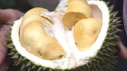 Hàng trăm người hoảng loạn sơ tán vì một trái sầu riêng