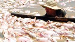Khu vực 1.500 tấn cá chết ở Đồng Nai: Nước có khí độc vượt mức
