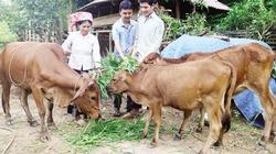 Mường Nhé đẩy mạnh tái cơ cấu nông nghiệptheo hướng nâng cao giá trị