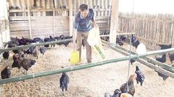 Khai thác thế mạnh nông nghiệp - cách làm của Mường Chà