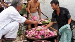 Trà ướp sen Tây Hồ ở Hà Thành 5 triệu đồng/kg, có tiền cũng không dễ mua