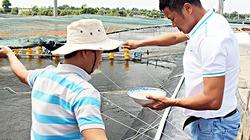 Thời tiết chuyển mưa, nuôi trồng thủy sản lưu ý những gì?