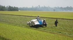 """Nông dân trồng lúa """"hóng"""" cuộc chiến tranh thương mại Mỹ- Trung"""