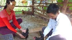 Ngưỡng mộ trang trại trên núi chỉ nuôi những giống gà quý hiếm