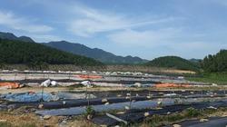 Mô hình trồng rau rừng hữu cơ hiệu quả ở trang trại Hoa Viên
