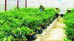 Doanh nghiệp Hà Tĩnh đầu tư vào nông nghiệp: Đã ít, lại khó!
