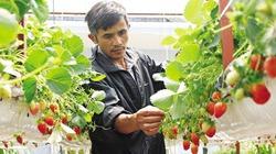 Trồng dâu tây lơ lửng, trái thả đong đưa, lãi 2 tỉ đồng mỗi năm
