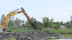 Bộ Nông nghiệp và Phát triển nông thôn kiểm tra vùng lũ Long An